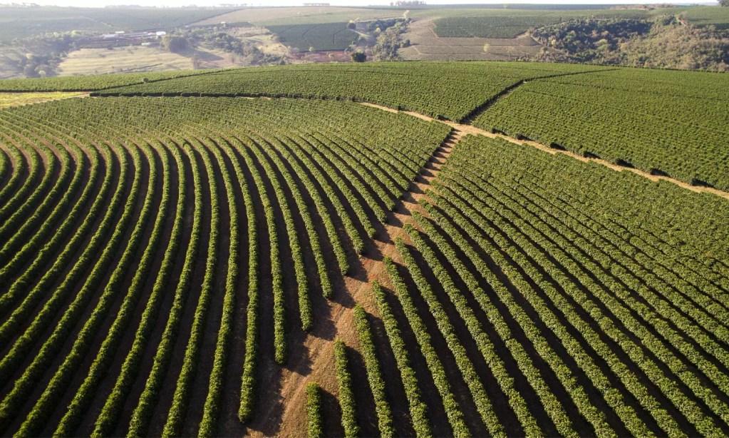Vista aérea de uma plantação de café para exportação em Minas Gerais